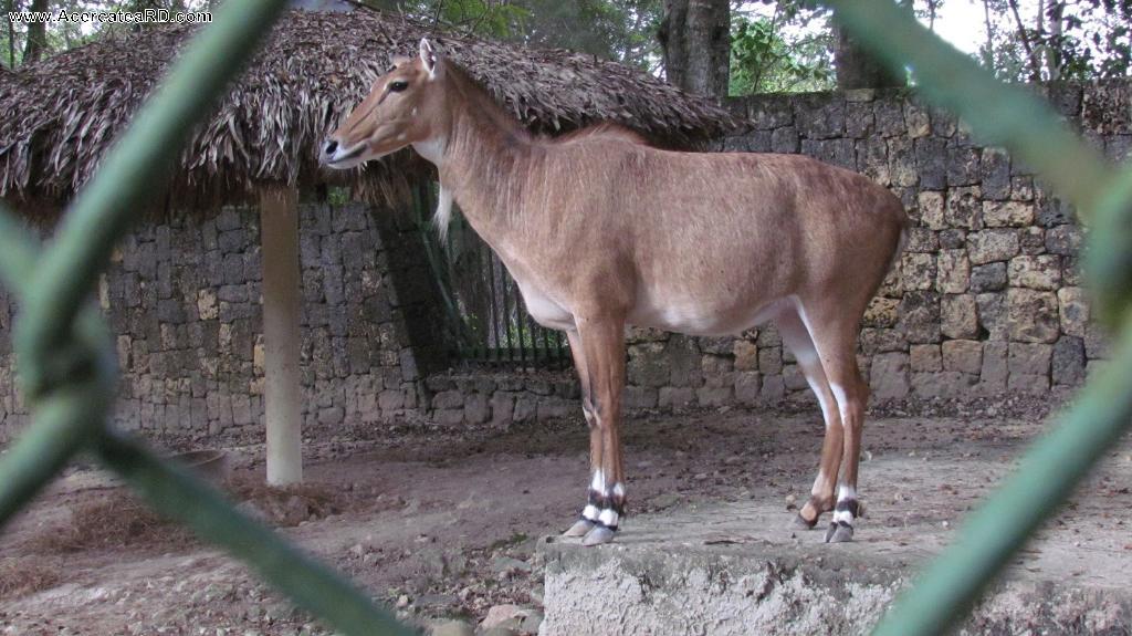Parque Zoológico Nacional de Santo Domingo -  en la Provincia - Santo Domingo